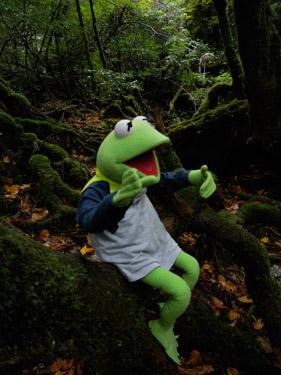 カエル君と歩く森 1