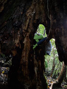 カエル君と歩く森 2