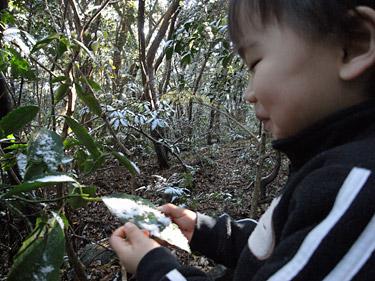 開聞岳登山の途中で、葉についた雪を食べる息子の写真