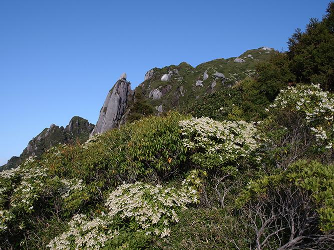 永田岳とアセビ群落