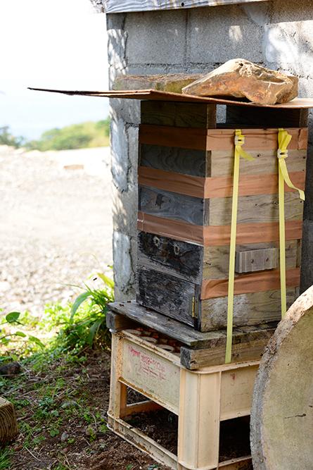 ニホンミツバチのお引っ越し(巣箱移動)