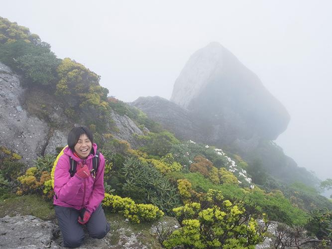 黒味岳山頂。ヤクシマシャクナゲが奥に咲いているのが見えます
