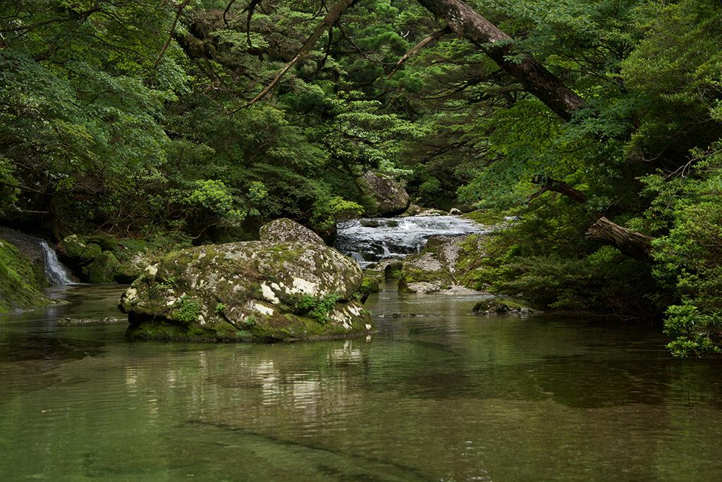 日本庭園はこの自然美から生まれたのでしょう