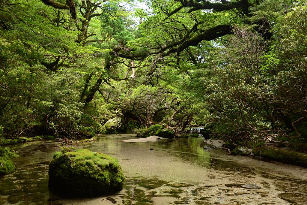 苔、巨木、清流、岩、そしてその見事までな在り方