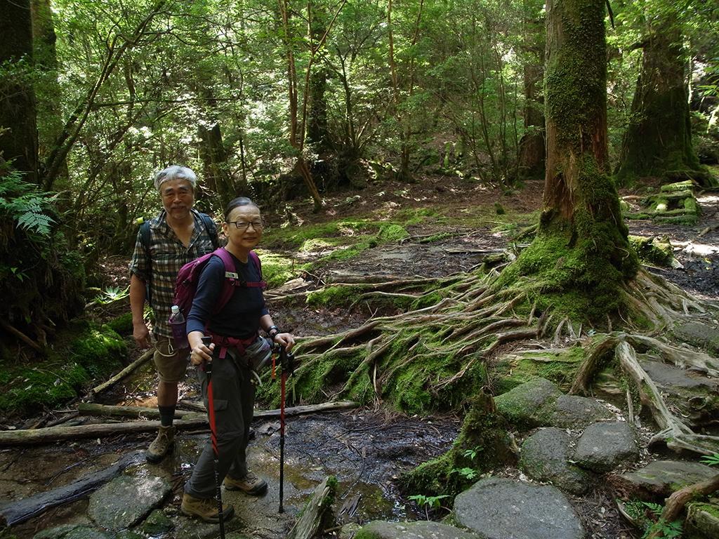 杉の根が地表を這うように広がる光景に驚く二人