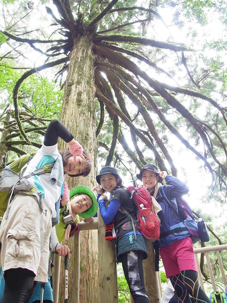 縄文杉近くに育つ蜘蛛のように枝を広げる面白い杉があり、その杉と写真を撮るためにカメラを下に置いて見上げるように4人を撮った写真