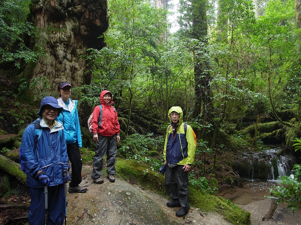 釈迦杉とその横に出来たまるで日本庭園のような美しい苔の風景をバックに撮った写真