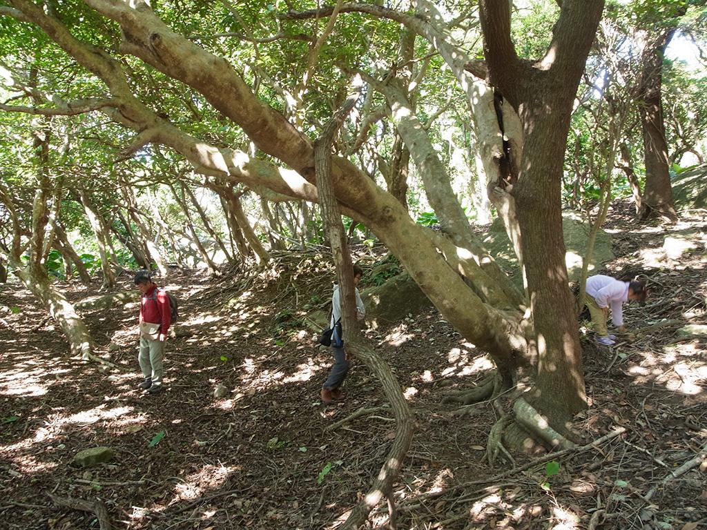 落ちている枯れ枝をバキバキと折るために、良い枝を物色中のご家族(笑)