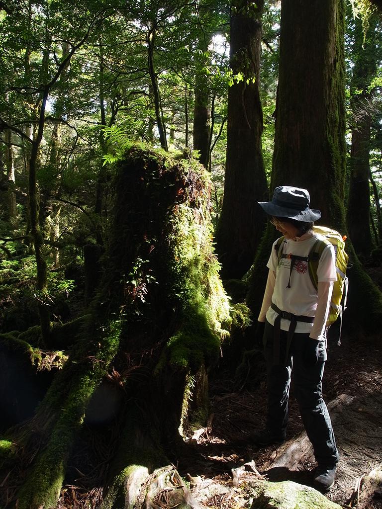 雫が木漏れ日で光り輝く様を見つめる参加者の写真