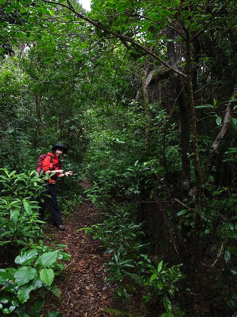 植物に覆い隠されそうな細い登山道を指さす参加者の写真