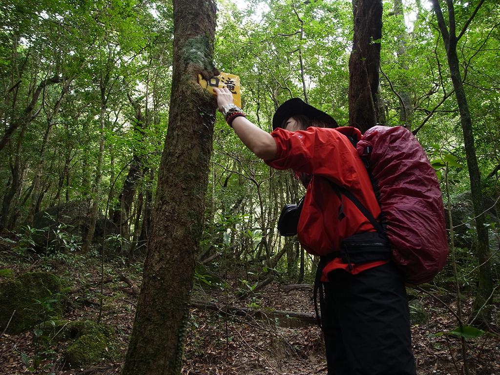 木に打ち込まれた道標を木の内側に取り込んでいる様子に感心して魅入っている参加者の写真