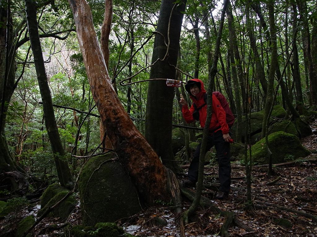 ツル植物が絡みあったその様が「ハンガー」にそっくりで、そこにタオルを干してポーズを取る参加者の写真