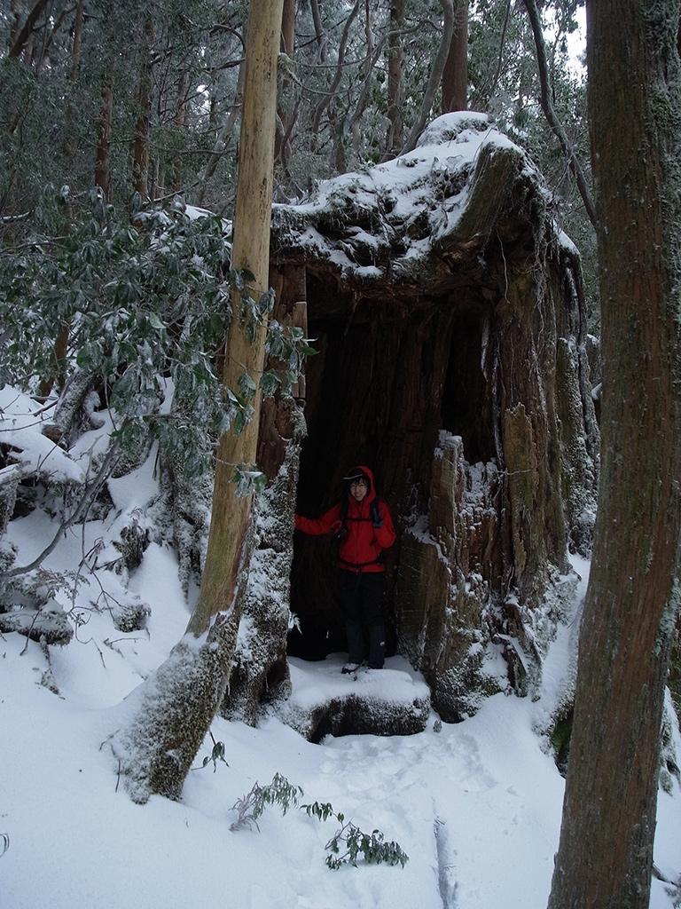 屋久杉の一部が伐られていて、まるで小部屋のようになっているその入口に満面の笑みで立つ参加者の写真
