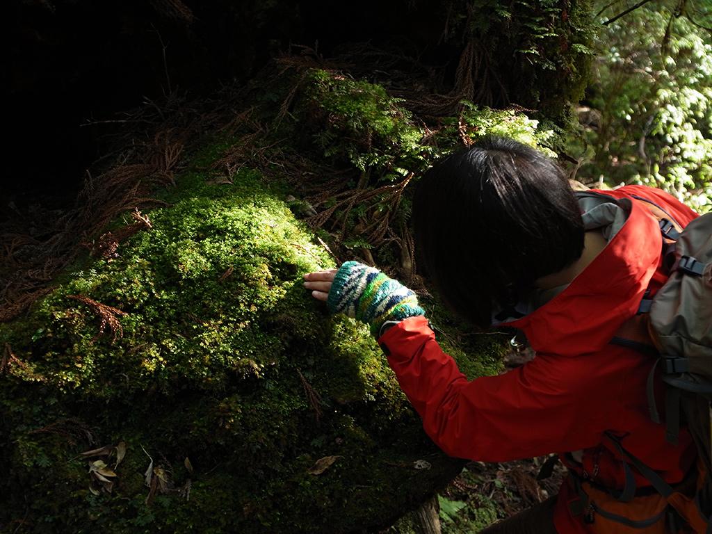 巨木を纏(まと)う苔の絨毯に魅入る参加者