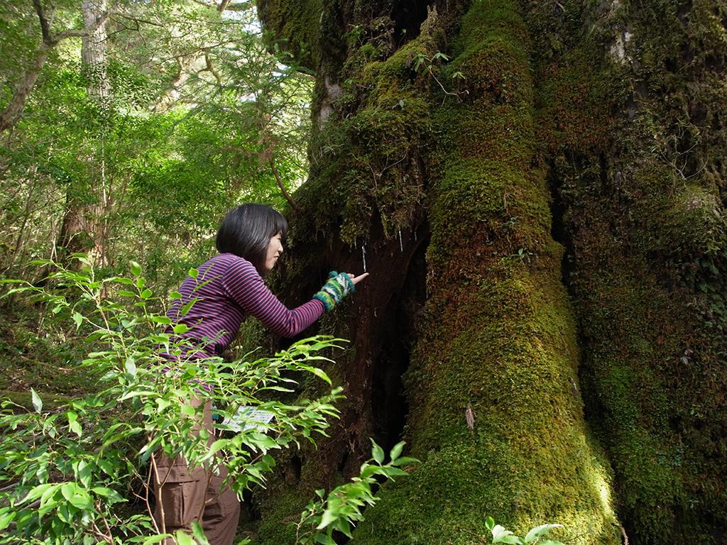 苔をそっと触る参加者の写真