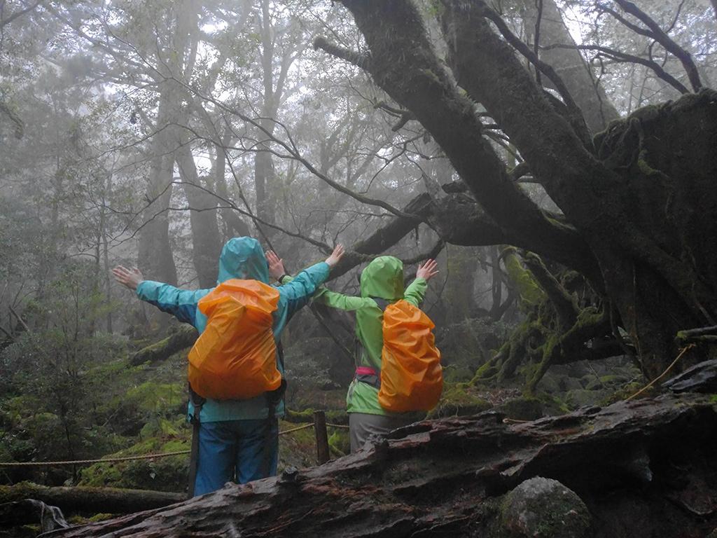 苔むす森に到着し、二人が景色を見ながら大きく手をあげて気持ちよさを表現してくれた写真
