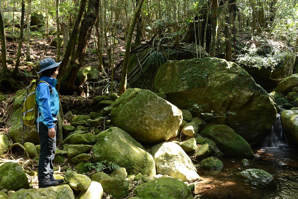 新緑が芽吹き始める照葉樹の森を流れる清流の前に立ち魅入る参加者の写真