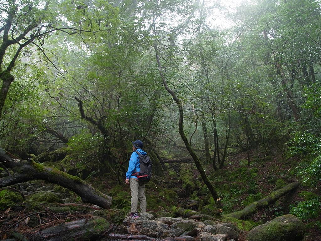 ガスに包まれる森を静かに眺める参加者の姿写真