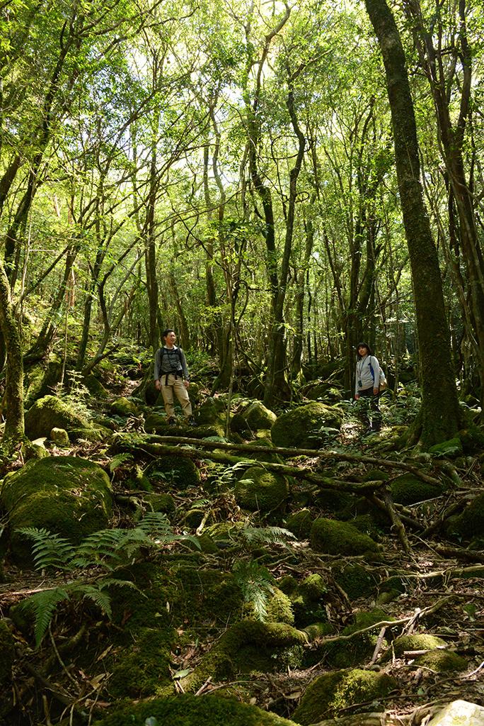 深い苔の森に立ち尽くす二人の姿