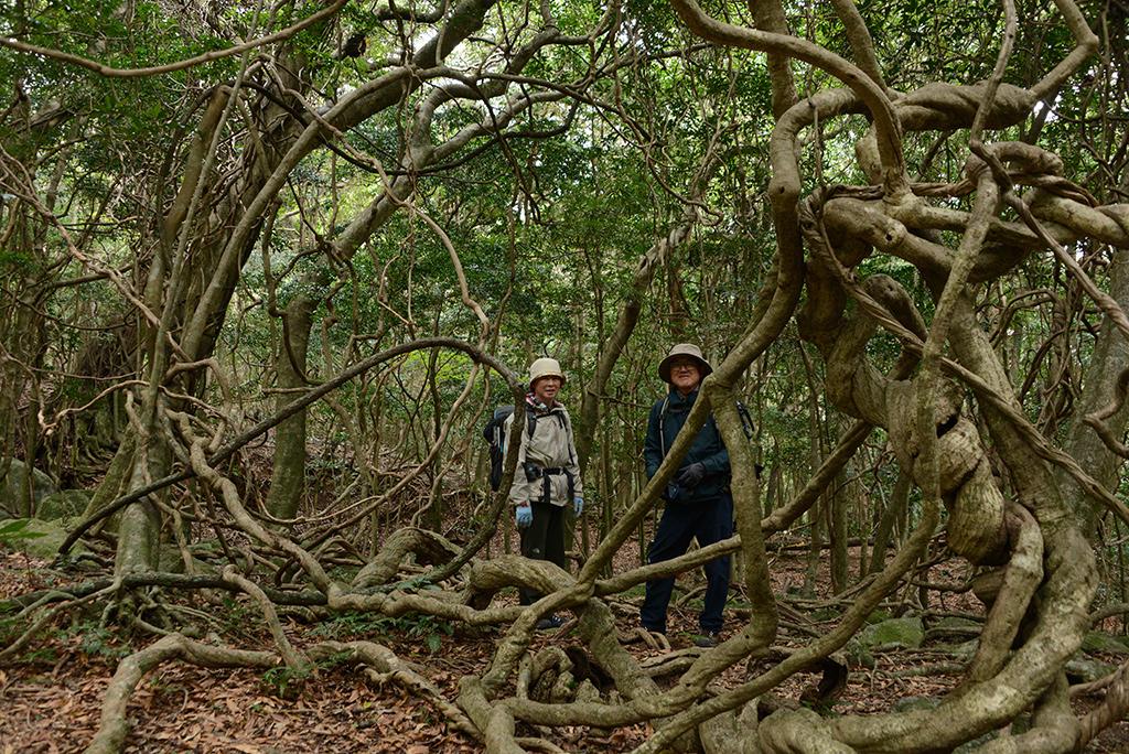 ジャングルの中のようにツルが絡み合う中、ご夫婦でのツーショット写真