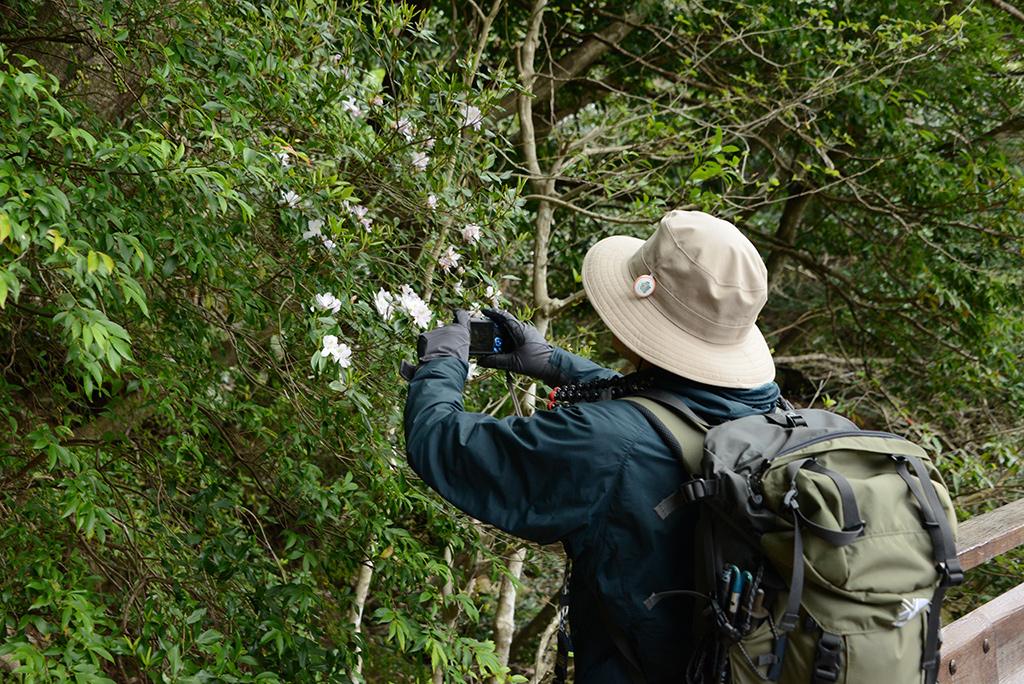 綺麗に咲き誇るサクラツツジの写真をとるご主人のSさん写真