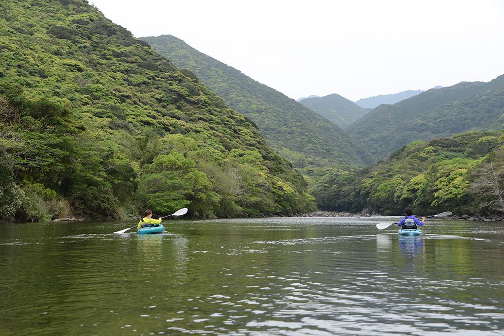 照葉樹林の新緑は様々な色で森を覆い尽くし、川岸まで迫ったその新緑の中を漕ぎ進む二人の後ろ姿