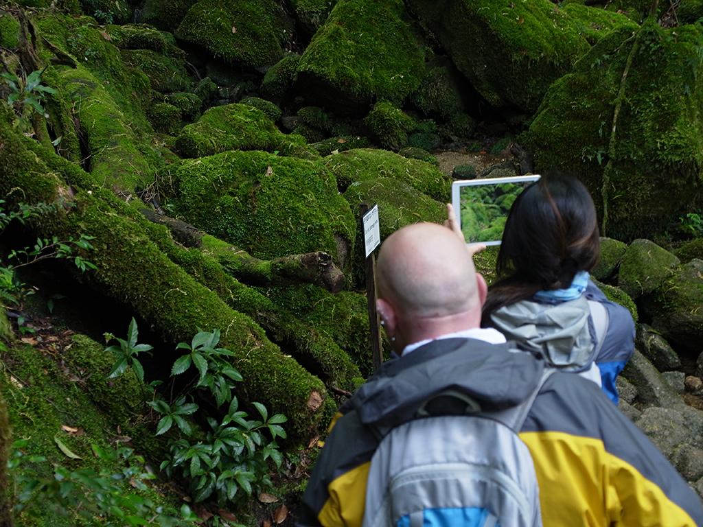 コケの森を実際に目の当たりにして感動しながら写真を撮るMさんの写真