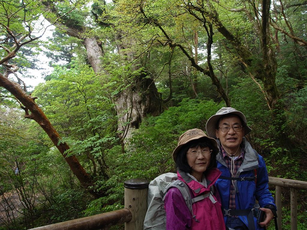 縄文杉の横顔が見える角度のデッキからお二人で記念写真