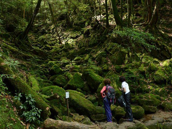 苔むした沢筋を眺め、屋久島の苔の美しさを実感する二人の写真