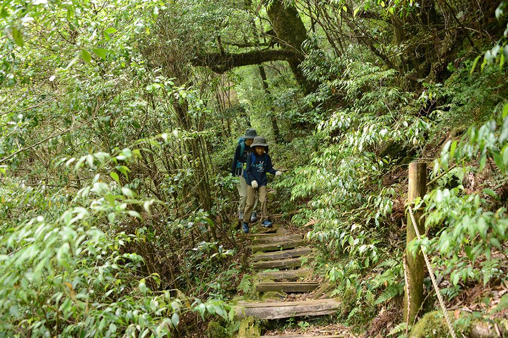森の中を抜ける細い木道を向こう側から歩いてくる親子二人の写真