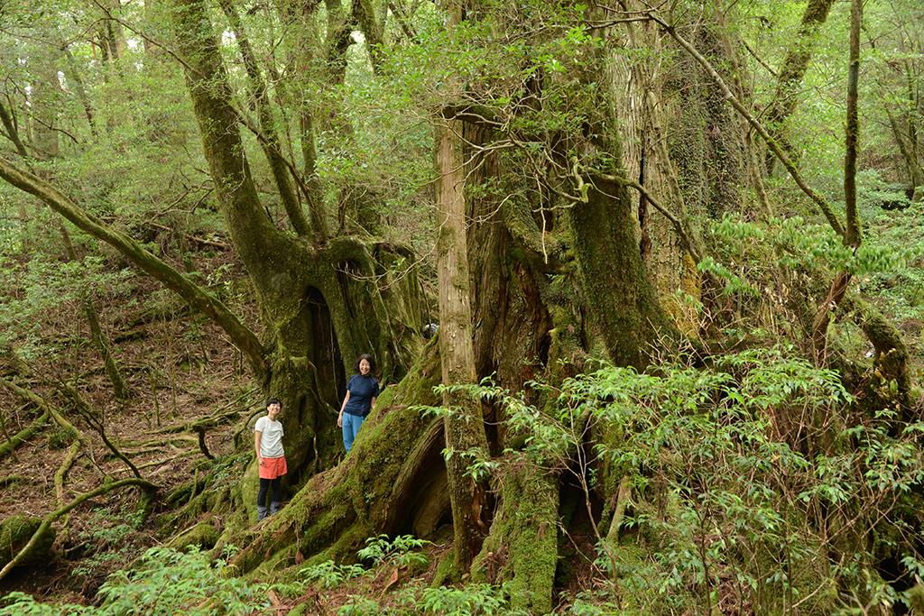美穂野杉の裏に回って巨木に抱かれる二人の写真