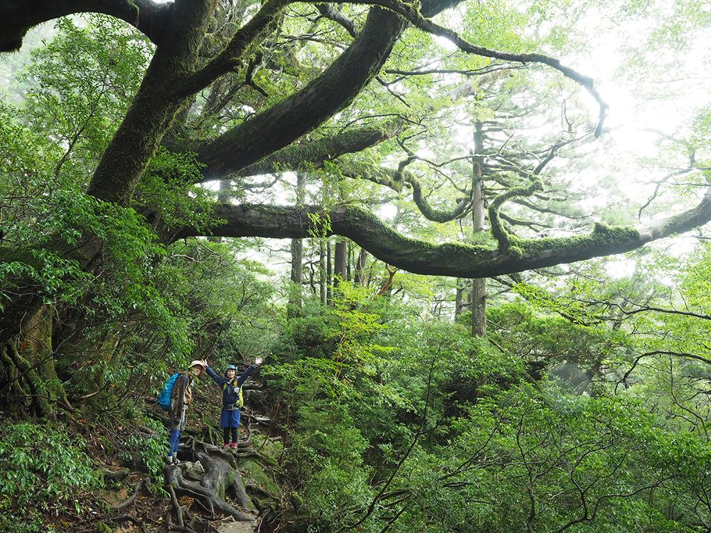 ハリギリの巨木が張り出す巨大な枝下で撮った参加者二人の写真