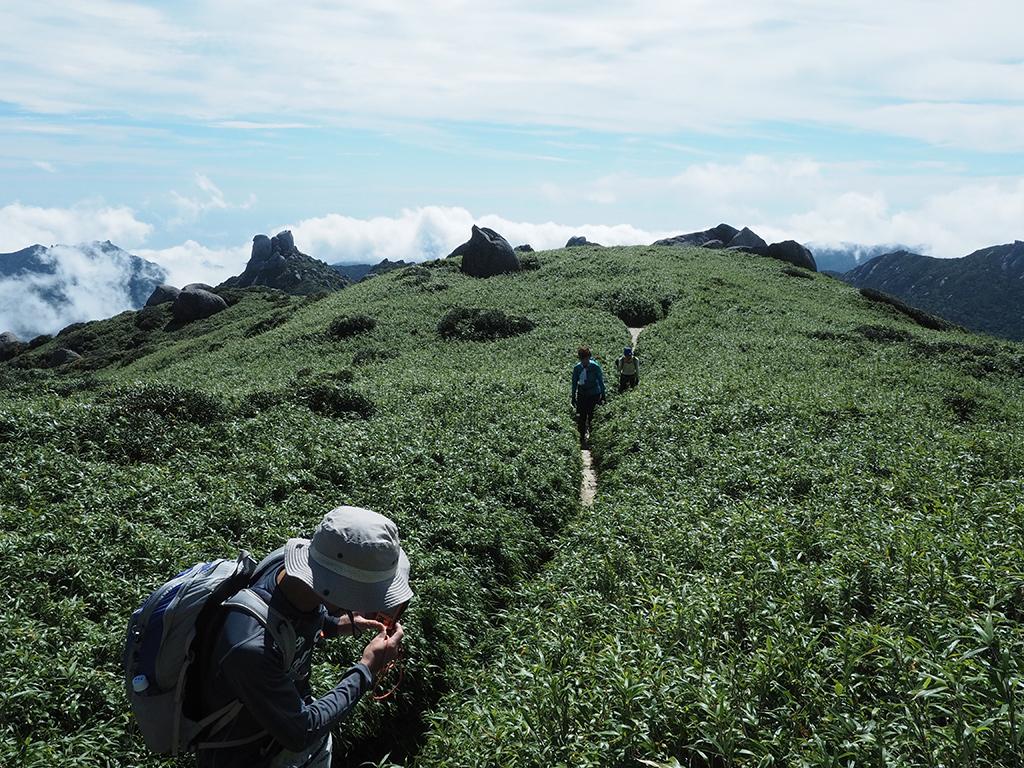 ヤクザサに囲まれた稜線の細い登山道を歩いている写真