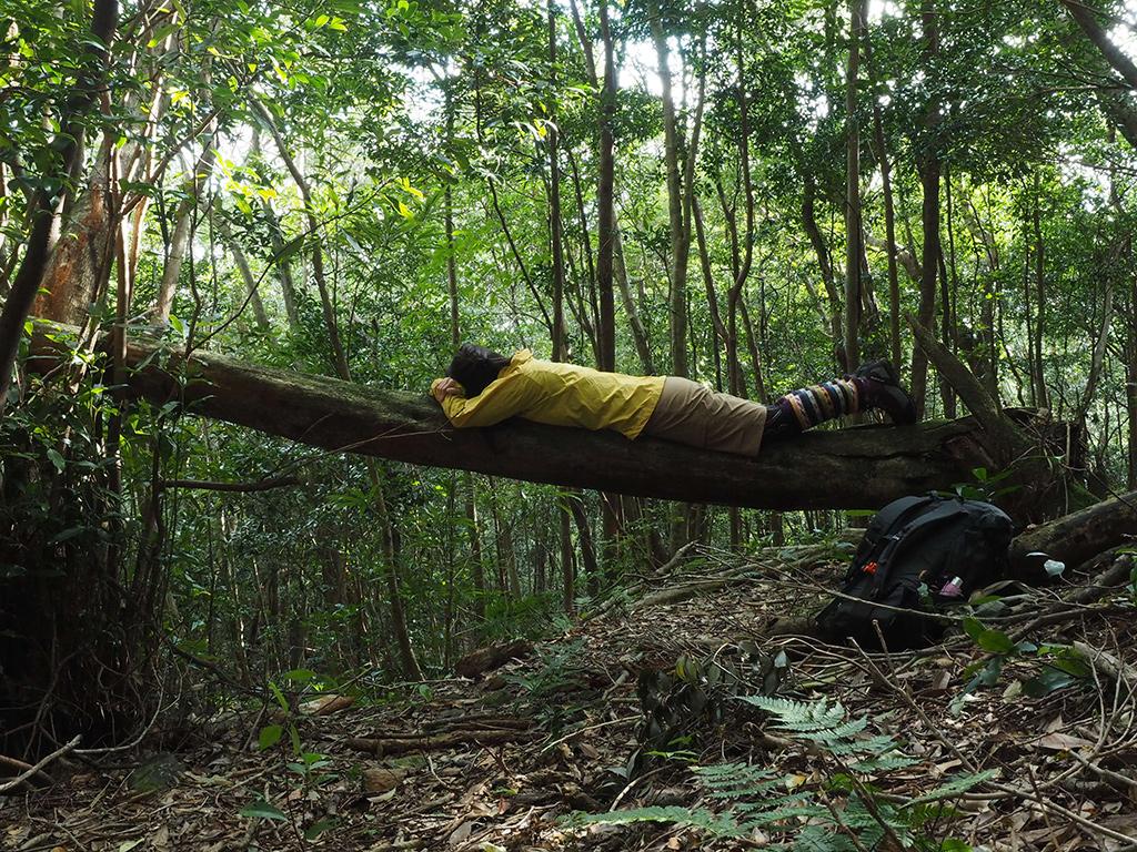 水平近くまで倒れ込んでいた倒木に乗って横たわる参加者