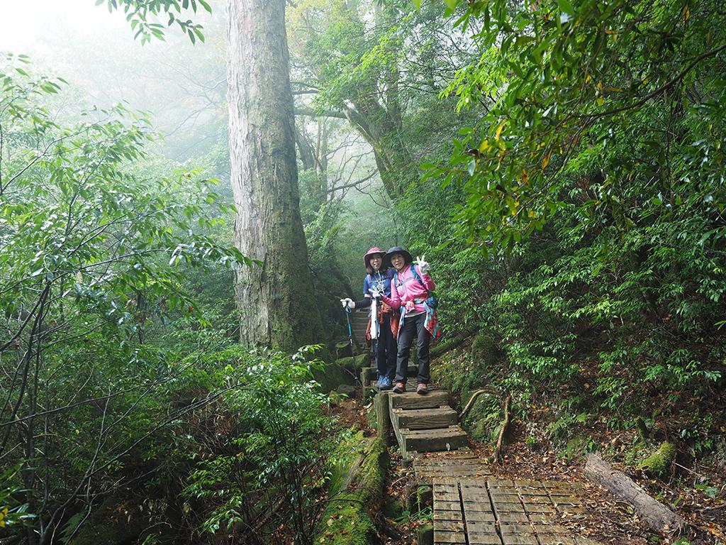 ポッカリと空いて出来たギャップで明るい森の雰囲気を味わう二人の写真