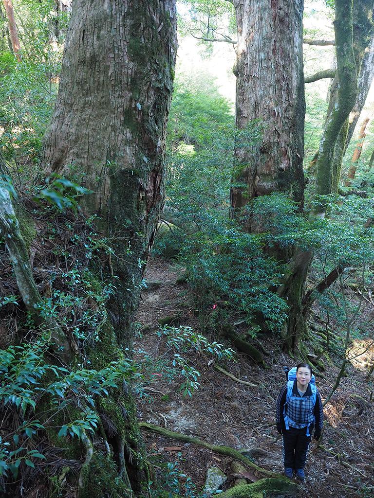 如何にもこの大和杉ツアーらしい光景が広がる巨木の森をバックに撮った写真