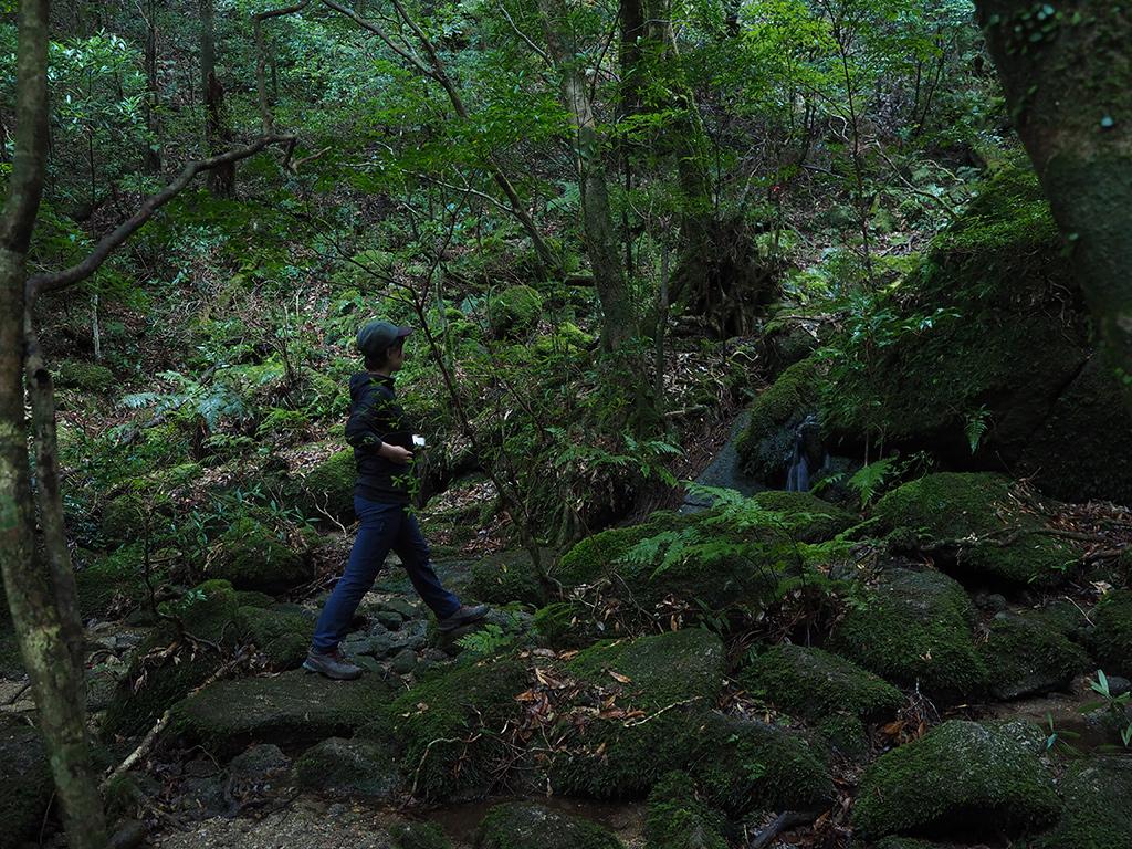 標高600m付近の沢沿いは雪がまだほとんど無く、緑の世界が広がる中を歩く参加者の姿写真