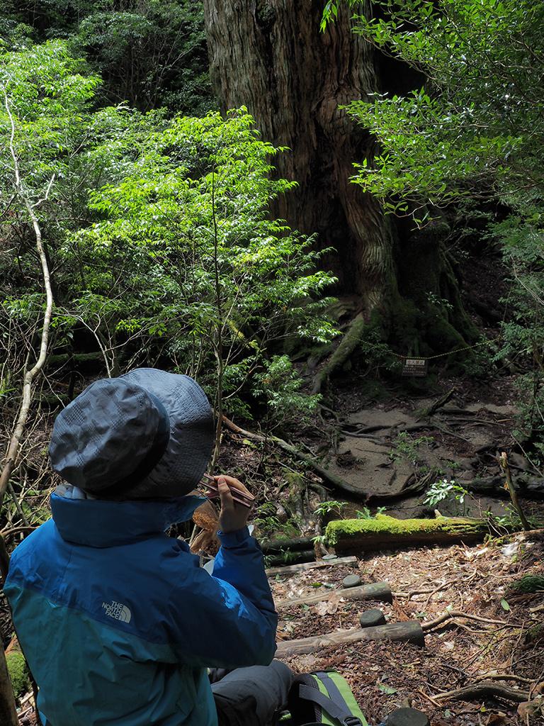 大和杉を眺めながらのランチをとる参加者