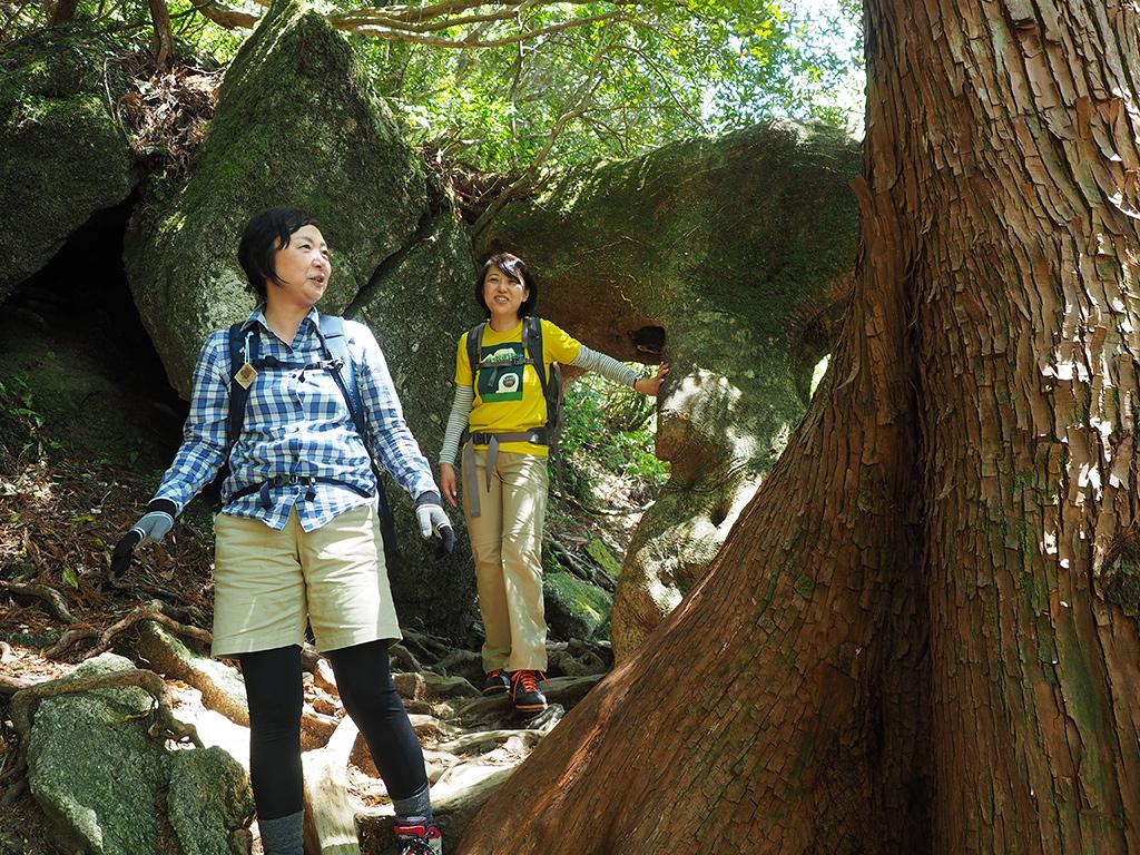 ヤマグルマという木がトンネルのような形に横に這い、そのトンネルをくぐり抜けた時の二人の写真