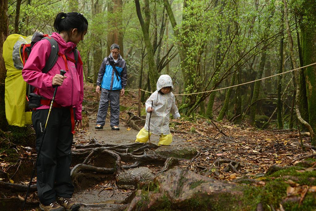 お母さんがストックを使い始めたので、真似をして拾った枝で歩くMちゃんの写真