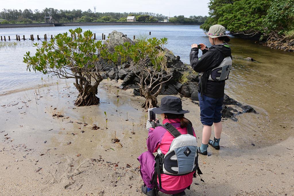 マングローブの1種であるメヒルギの写真を撮る参加者二人の写真