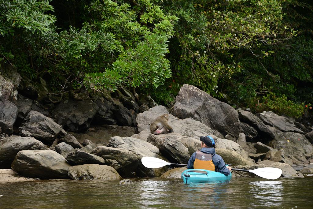 川岸に現れたヤクザルにカヤックで近づいて見ている写真