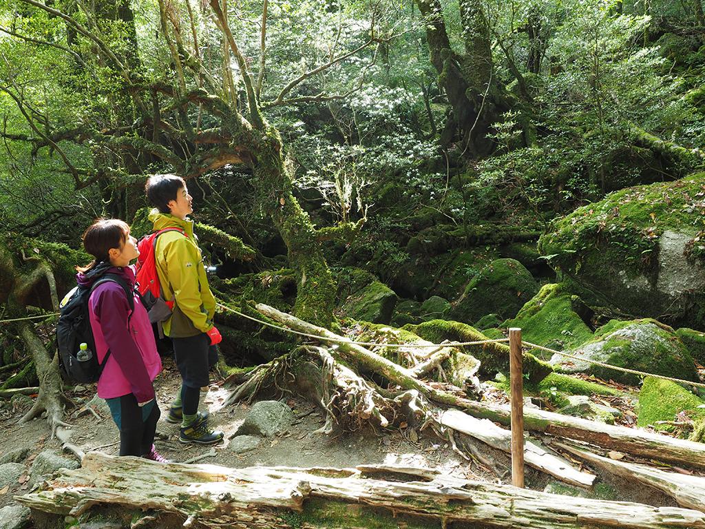 苔むす森でうわぁ〜!っと景色に見入る二人の写真