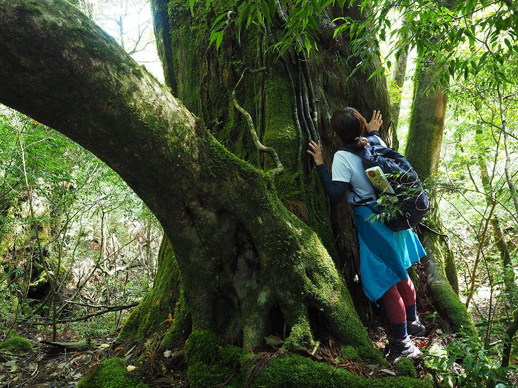 屋久杉に抱きつき、屋久杉を感じようとしている参加者の後ろ姿写真