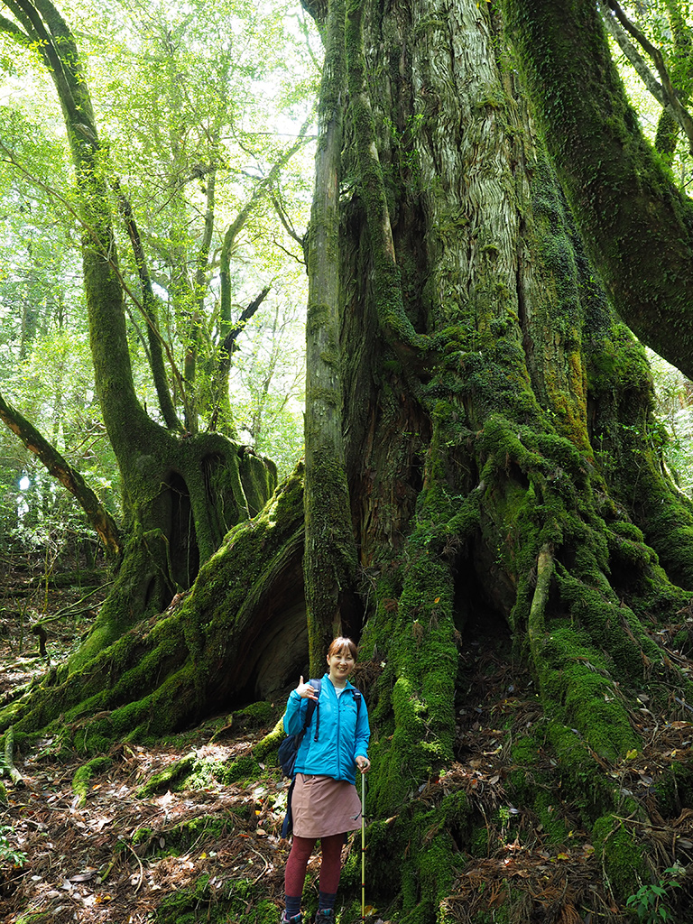 三穂野杉と参加者の写真