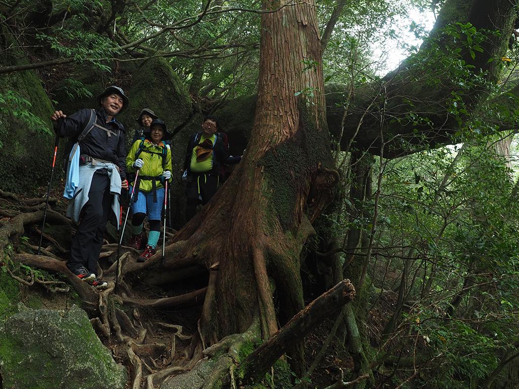 ヤマグルマのトンネルを抜ける4人の写真