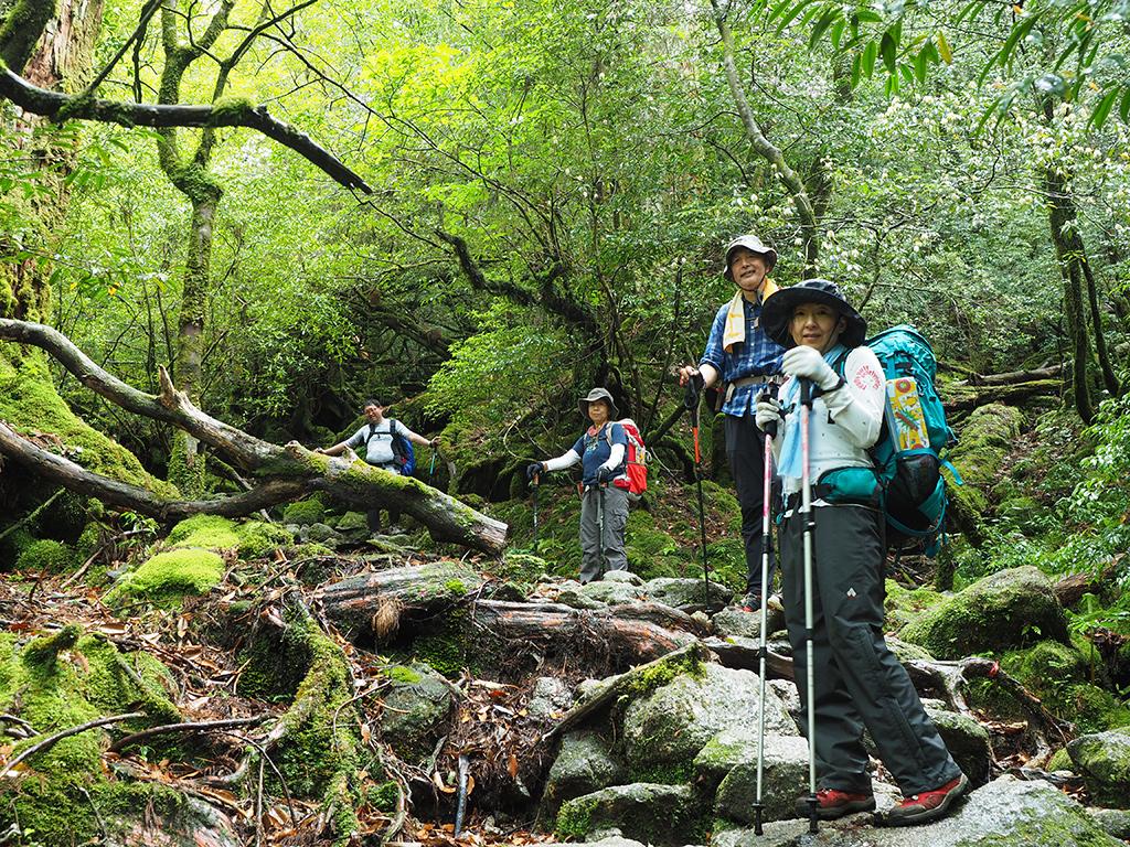 太鼓岩から下りてきて、苔むす森へ向かうみんなの写真