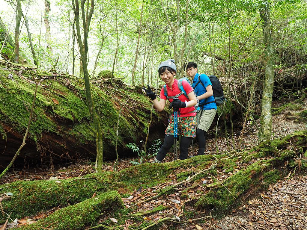 ねじ切れそうな木目の屋久杉の巨木と二人の写真