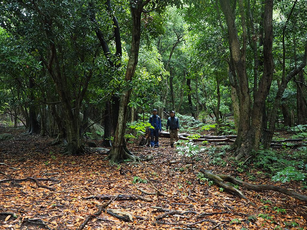 照葉樹の森を語り合いながら歩いてくる二人の写真