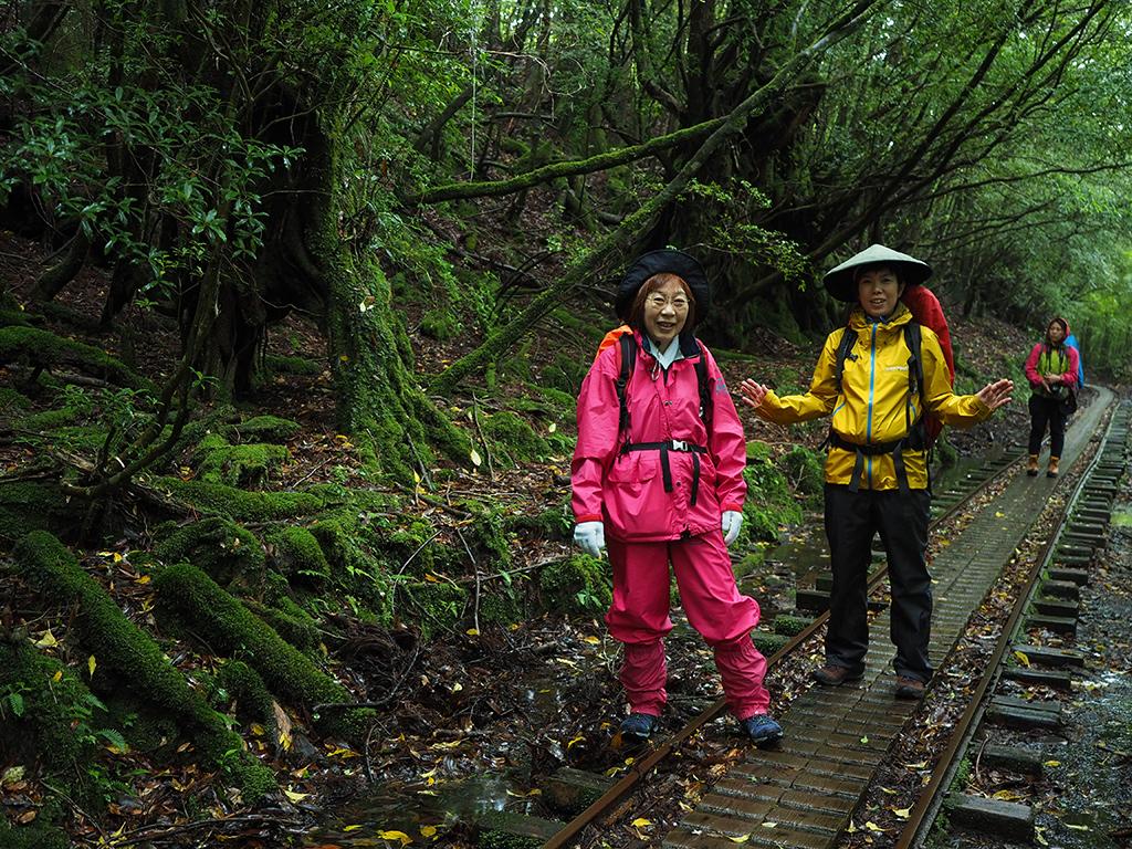 雨がぱらつく中、屋久杉の切り株が散見されるようになった苔むす森で親子二人での写真